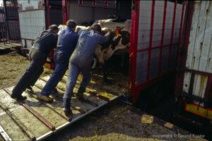 Zwolle veemarkt 1984-1987